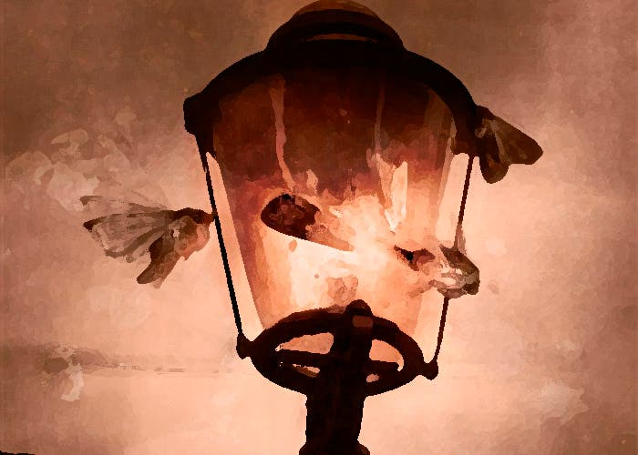 Las polillas atraídas por la luz